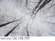 Купить «Ветви дерева в тумане», фото № 26138797, снято 2 апреля 2017 г. (c) Иван Аборнев / Фотобанк Лори