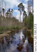 Купить «Огромная лужа на лесной дороге», эксклюзивное фото № 26190573, снято 2 мая 2017 г. (c) Dmitry29 / Фотобанк Лори