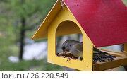 Купить «Кормушка для птиц и ее посетители», видеоролик № 26220549, снято 10 мая 2017 г. (c) Наталья Волкова / Фотобанк Лори