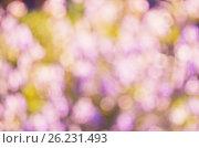 Купить «Abstract nature bokeh background - blur colorful bokeh. Nature blurred bokeh background from plant.», фото № 26231493, снято 24 ноября 2014 г. (c) Irina Shisterova / Фотобанк Лори