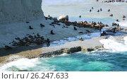 Купить «Sea lions rookeries at ocean coast of Valdes Peninsula in Argentina», видеоролик № 26247633, снято 10 марта 2017 г. (c) Яков Филимонов / Фотобанк Лори