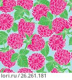 Seamless pattern with raspberries. Vector illustration. Стоковая иллюстрация, иллюстратор Irina Shisterova / Фотобанк Лори