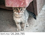 Homeless Kitten In The Street. Стоковое фото, фотограф Светлана Сухорукова / Фотобанк Лори