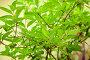 Ветки с зелеными листьями, фото № 26268213, снято 22 мая 2017 г. (c) Марина Володько / Фотобанк Лори