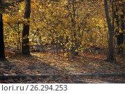 Осень. Стоковое фото, фотограф Франгони Владимир / Фотобанк Лори