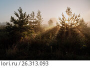Купить «Sun rays in forest. Fresh morning.», фото № 26313093, снято 6 августа 2016 г. (c) Liseykina / Фотобанк Лори