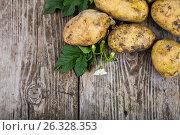 Купить «Raw potatoes with leaves», фото № 26328353, снято 3 июля 2016 г. (c) Елена Блохина / Фотобанк Лори