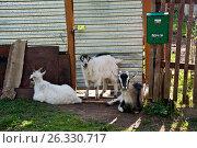 Купить «Козы», фото № 26330717, снято 3 мая 2017 г. (c) Владимир Федечкин / Фотобанк Лори