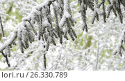 Green leaves of the trees and grass covered with snow after weather changes. Стоковое видео, видеограф Станислав Сергеев / Фотобанк Лори