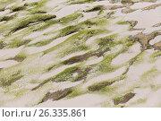 Купить «close up of stone or volcanic rock with sand», фото № 26335861, снято 12 февраля 2017 г. (c) Syda Productions / Фотобанк Лори