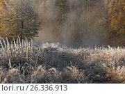 Осень. Стоковое фото, фотограф Минаева Вера / Фотобанк Лори