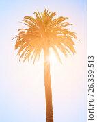Купить «Tropical palm tree», фото № 26339513, снято 11 ноября 2016 г. (c) Юрий Губин / Фотобанк Лори
