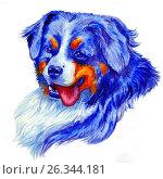Купить «Portrait bernese mountain dog», фото № 26344181, снято 2 апреля 2017 г. (c) Анастасия Некрасова / Фотобанк Лори