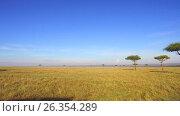 Купить «acacia trees in savanna at africa», видеоролик № 26354289, снято 16 апреля 2017 г. (c) Syda Productions / Фотобанк Лори