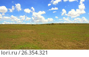 Купить «maasai mara national reserve savanna at africa», видеоролик № 26354321, снято 19 апреля 2017 г. (c) Syda Productions / Фотобанк Лори