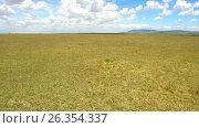 Купить «maasai mara national reserve savanna at africa», видеоролик № 26354337, снято 19 апреля 2017 г. (c) Syda Productions / Фотобанк Лори