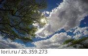 Купить «Небо африканской саванны. Танзания.», видеоролик № 26359273, снято 15 февраля 2017 г. (c) Сергей Петренко / Фотобанк Лори