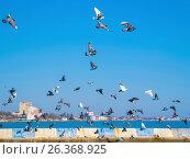 Купить «A lot of pigeons on fly against the sky», фото № 26368925, снято 22 марта 2017 г. (c) Andrey Ganysh / Фотобанк Лори