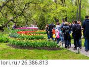 Купить «Фестиваль тюльпанов на Елагином острове. Санкт-Петербург», эксклюзивное фото № 26386813, снято 27 мая 2017 г. (c) Александр Щепин / Фотобанк Лори