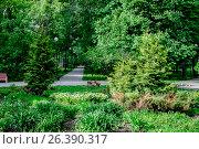Купить «Москва, аллея в Чапаевском парке», фото № 26390317, снято 26 мая 2017 г. (c) glokaya_kuzdra / Фотобанк Лори
