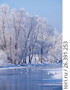 Altai river Talitsa with with couple of swans and reflection of willow trees covered by hoarfrost in water in winter, фото № 26391253, снято 19 января 2017 г. (c) Serg Zastavkin / Фотобанк Лори
