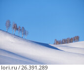 Belt of birch trees under hoarfrost on snow heels under blue sky in winter season, фото № 26391289, снято 19 января 2017 г. (c) Serg Zastavkin / Фотобанк Лори
