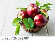 Купить «Спелые красные яблоки с зелеными листьями. Ripe red apples with green leaves», фото № 26392881, снято 23 июня 2016 г. (c) TasiPas / Фотобанк Лори