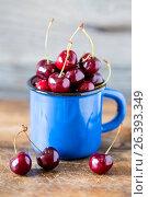 Fresh cherry in a blue metal circle. Стоковое фото, фотограф Наталья Майорова / Фотобанк Лори