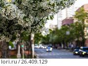 Купить «Екатеринбург», фото № 26409129, снято 19 августа 2018 г. (c) Сергеев Валерий / Фотобанк Лори