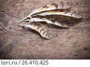 Купить «Feathers of a bird on a wooden background», фото № 26410425, снято 22 мая 2017 г. (c) Майя Крученкова / Фотобанк Лори