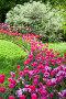 Весенняя клумба с тюльпанами в городском парке, фото № 26420621, снято 26 мая 2017 г. (c) Татьяна Белова / Фотобанк Лори