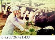 Купить «Positive woman feeding cows with grass at cowhouse», фото № 26421433, снято 12 ноября 2019 г. (c) Яков Филимонов / Фотобанк Лори
