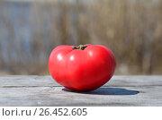 Купить «Спелый помидор», фото № 26452605, снято 12 октября 2016 г. (c) Вероника / Фотобанк Лори