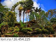 Купить «Красивые джунгли острова Борнео, экзотические пальмы», фото № 26454225, снято 24 марта 2014 г. (c) Evgenii Mitroshin / Фотобанк Лори