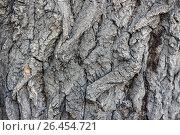 Купить «Texture of the dark bark of a tree», фото № 26454721, снято 28 мая 2017 г. (c) Виктория Кузьменкова / Фотобанк Лори