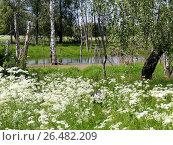 Начало лета. Стоковое фото, фотограф Качанов Владимир / Фотобанк Лори
