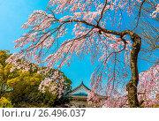 Купить «Japan,Kansai, Osaka City, Osaka Castle», фото № 26496037, снято 7 июня 2020 г. (c) age Fotostock / Фотобанк Лори