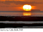 Купить «Wadden sea near Spieka Neufeld at sunset, car ferry on the Weser, Germany, Lower Saxony, Spieka Neufeld», фото № 26504741, снято 12 ноября 2015 г. (c) age Fotostock / Фотобанк Лори