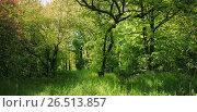 Купить «Лиственный лес летом», фото № 26513857, снято 21 мая 2017 г. (c) виктор химич / Фотобанк Лори