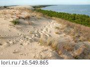 Купить «Склон песчаной дюны на Куршской косе», эксклюзивное фото № 26549865, снято 11 июня 2017 г. (c) Svet / Фотобанк Лори