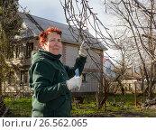 Купить «Пожилая женщина обрезает ветки дерева», эксклюзивное фото № 26562065, снято 25 апреля 2017 г. (c) Вячеслав Палес / Фотобанк Лори