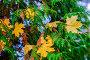 Россия, осень, листопад в парке, фото № 26569705, снято 23 июня 2017 г. (c) glokaya_kuzdra / Фотобанк Лори