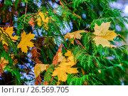 Купить «Россия, осень, листопад в парке», фото № 26569705, снято 26 января 2020 г. (c) glokaya_kuzdra / Фотобанк Лори