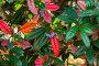 Сочи, парк Дендрарий,  барбарис Юлианы (Berberis julianae), фото № 26573845, снято 25 июня 2017 г. (c) glokaya_kuzdra / Фотобанк Лори