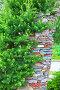 Садовая арка из камня с хвойными растениями. Территория Центрального Сибирского ботанического сада, Новосибирский Академгородок, Новосибирск, Сибирь, Россия, фото № 26574221, снято 25 июня 2017 г. (c) Евгений Мухортов / Фотобанк Лори