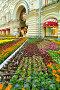 Фестиваль цветов. Декоративные цветы у ГУМа. Москва, фото № 26576361, снято 24 июня 2017 г. (c) Валерия Попова / Фотобанк Лори