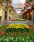 Бархатцы (Tagetes erecta) и другие декоративные цветы в ГУМе. Москва, фото № 26577333, снято 24 июня 2017 г. (c) Валерия Попова / Фотобанк Лори