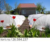 Весенний пейзаж на дачном участке. Стоковое фото, фотограф Вячеслав Палес / Фотобанк Лори