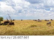 Купить «group of herbivore animals in savannah at africa», фото № 26607661, снято 18 февраля 2017 г. (c) Syda Productions / Фотобанк Лори