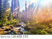 """Красивый солнечный свет в сибирской горной тайге. Природный парк """"Ергаки"""" (2017 год). Редакционное фото, фотограф Виктор Никитин / Фотобанк Лори"""